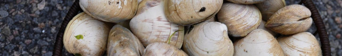 Clams are an abundant food source on Vancouver Island